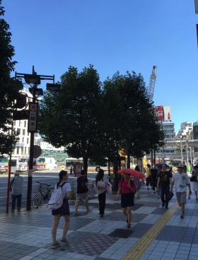 渋谷駅前会館(飯島)その他写真